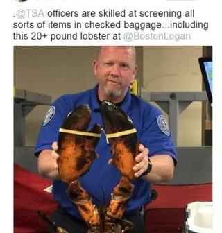 96722643_lobsters.jpg